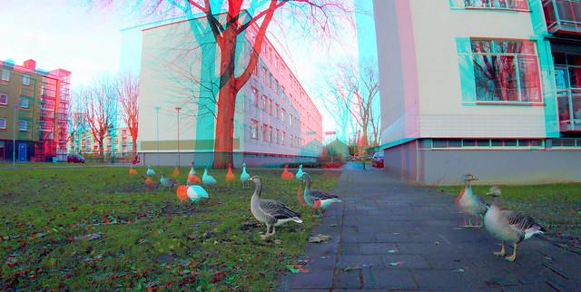 Geese Lage Land Rotterdam 3D GoPro