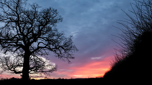 woodhouse§ hedge landscape sunset quorn leicestershire winter silhouette tree charnwood