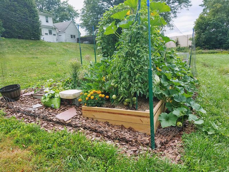 Vegetable Garden - from the Northwest
