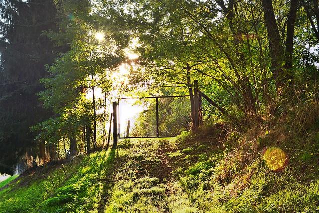 Forêt et soleil