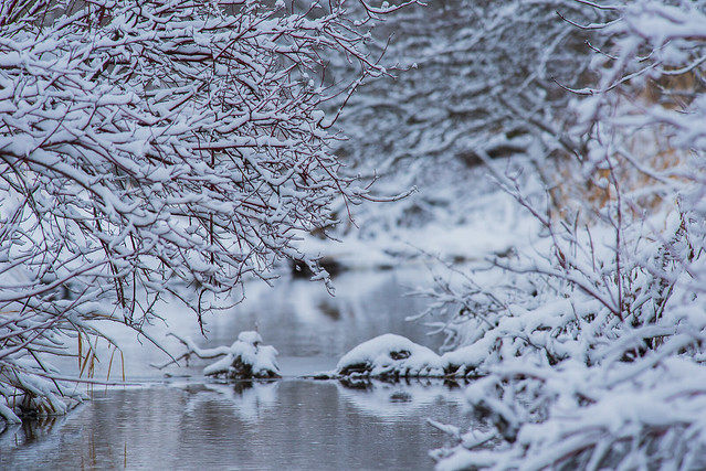 River's Edge | Winter Wonderland