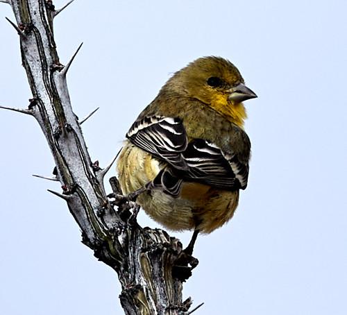 bird birds nature scenicnature mountains landscapes