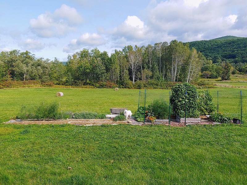Backyard Garden - middle view