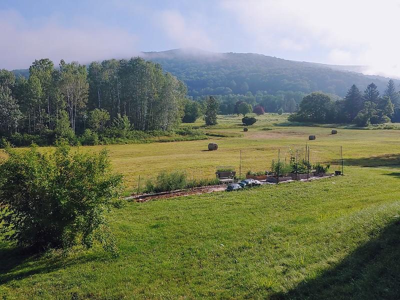 Backyard Garden - Forsythia Corner View