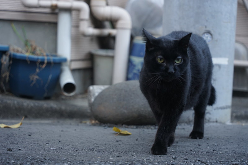 11Sony α7Ⅱ+TAMRON 28 200mm f2 8 5 6 RXD+Black Mistフィルター上池袋三丁目にしすがも橋麓の猫 黒