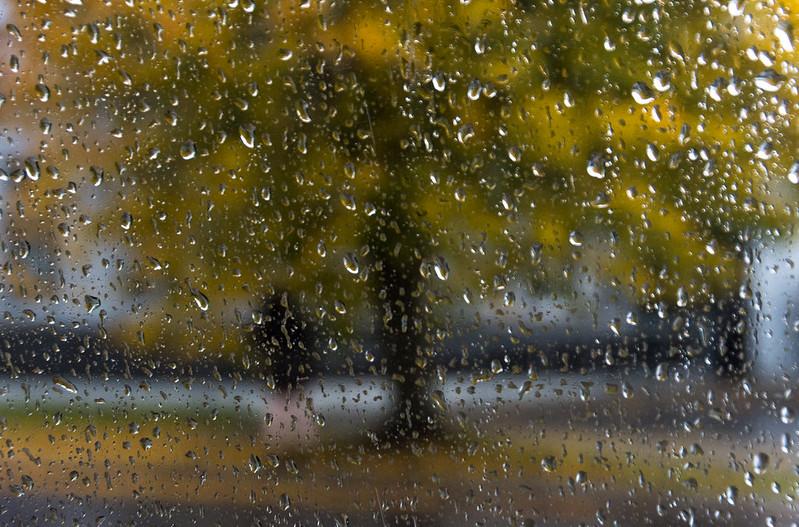 ACS photo de Radio-Canda_A l'abri sous l'arbre_Claude Jutras