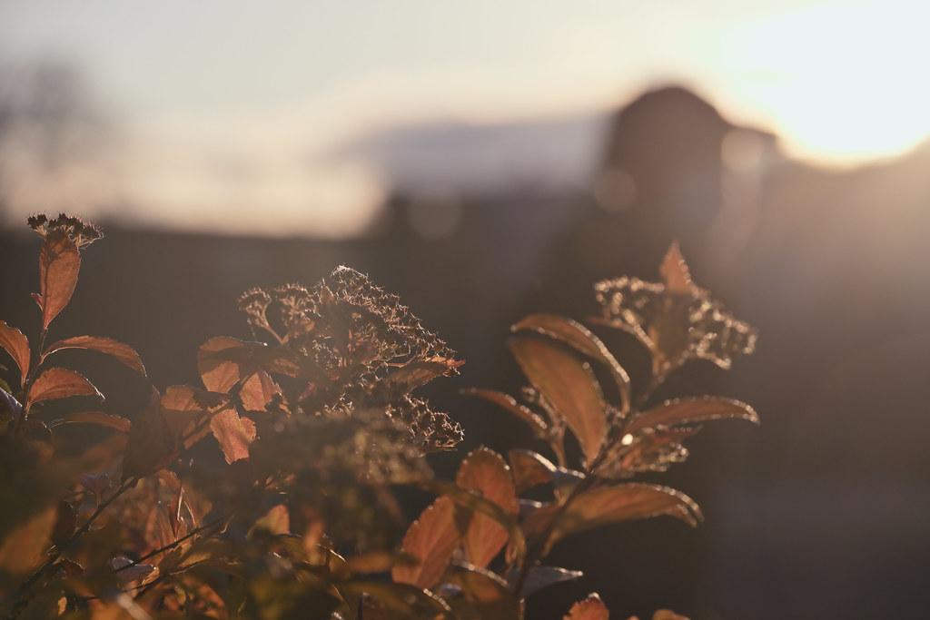 鴨川河川敷 冬の夕景