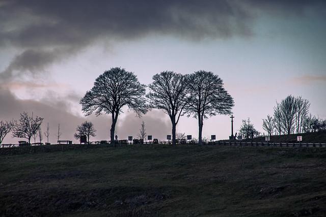 Trois arbres en hiver