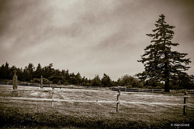 Cemetery near Louisbourg