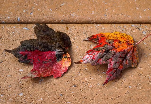 farewell to autumn/fall