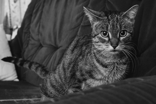 7e4_c263152-tuna-sofa