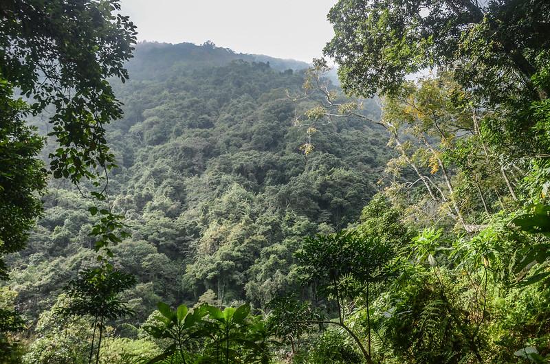 我丹山東峰腰繞段低窪蕨類區 (2)