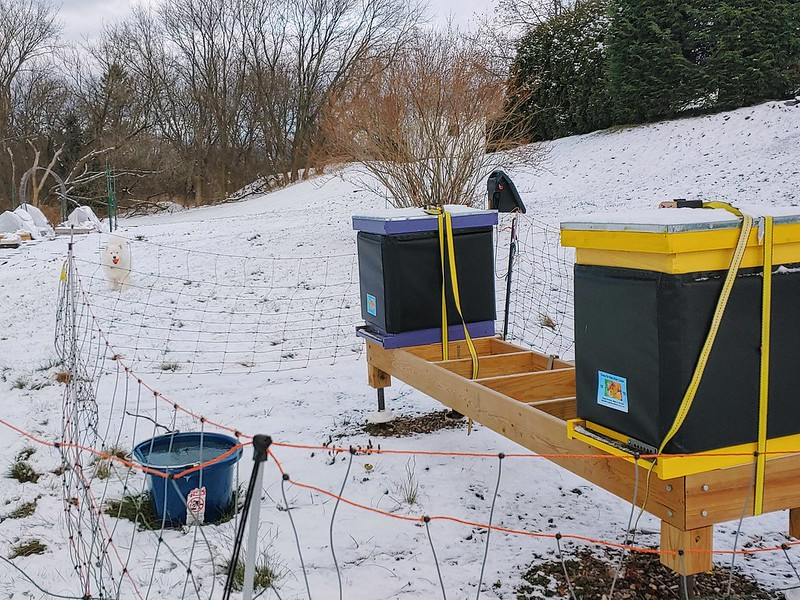 Winterized Beehives