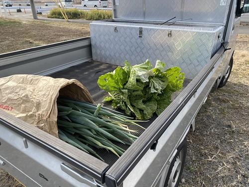 野菜もらってきました