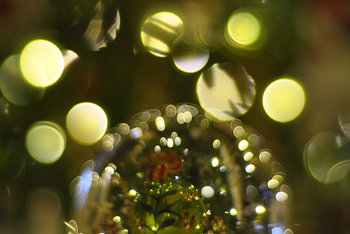 Christmas Tree vs. Lensball