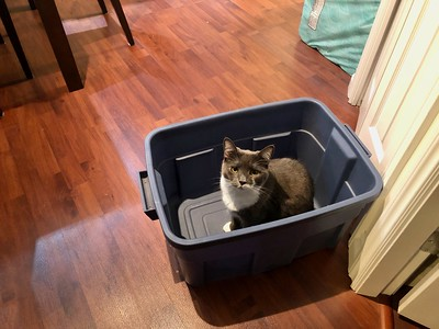 Crick in a Rubbermaid Bin