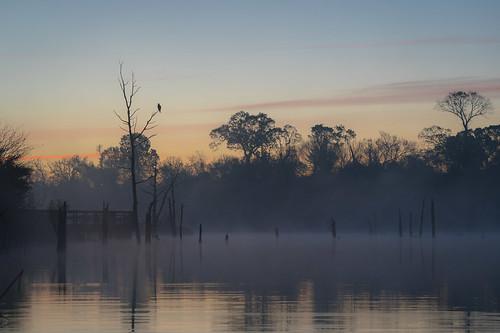 landscape osprey roost dawn water reflection boardwalk fog nature wildlife armandbayou pasadena texas kayak gseloff