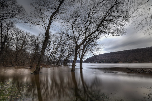 Flooded Shores