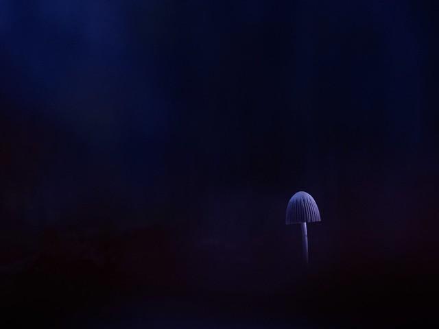 PB290024 - Ambiance nocturne (coprin)