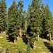 "<p><a href=""https://www.flickr.com/people/kodak260/"">Kodak Photographer</a> posted a photo:</p>  <p><a href=""https://www.flickr.com/photos/kodak260/50765702176/"" title=""190906 - Oregon - Mount Shasta Roadtrip - 04 Mount Shasta - Everitt Memorial Highway 1077""><img src=""https://live.staticflickr.com/65535/50765702176_dbb3d1baf9_m.jpg"" width=""160"" height=""240"" alt=""190906 - Oregon - Mount Shasta Roadtrip - 04 Mount Shasta - Everitt Memorial Highway 1077"" /></a></p>  <p>Everitt Memorial Highway<br /> <br /> <a href=""https://youpic.com/Kodak260"" rel=""noreferrer nofollow"">youpic.com/Kodak260</a><br /> <a href=""http://kodak260.nl/"" rel=""noreferrer nofollow"">kodak260.nl/</a></p>"