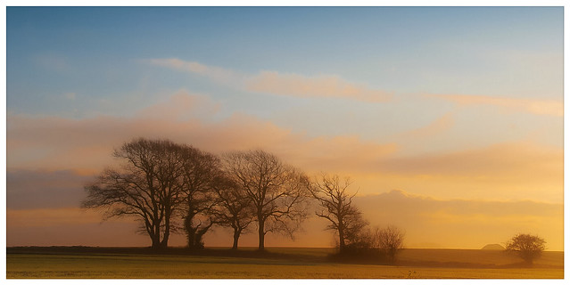 Trees in winter sunrise colours