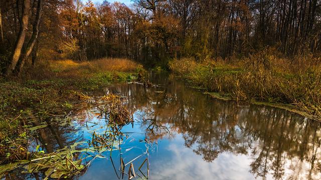 Water between trees