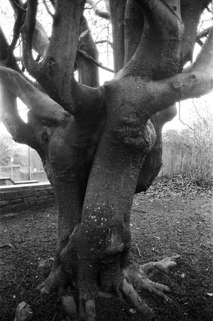 18 Tree, Grove Hill Park, Otley