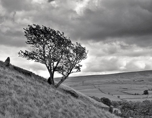 windy tree nature bleak grim weather natural hillside grow landscape hills welovethenorth nw northwest north english england dailyphoto photooftheday nice update place location uk visit area attraction open stream tour country item greatbritain britain british gb capture buy stock sell sale outside like good flickr outdoors caught photo view shoot shot picture captured ilobsterit instragram lancashire lancs