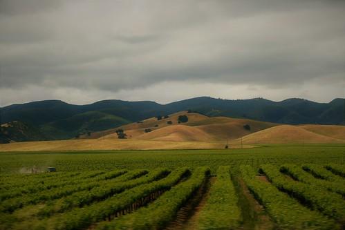 colinas de oro y verde