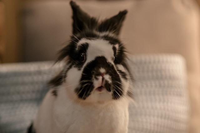 When Einstein the rabbit saw the Christmas Tree