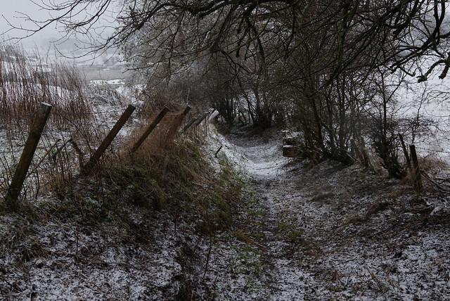 Snowy Down the Rabbit Hole [Explore 29/12/20]