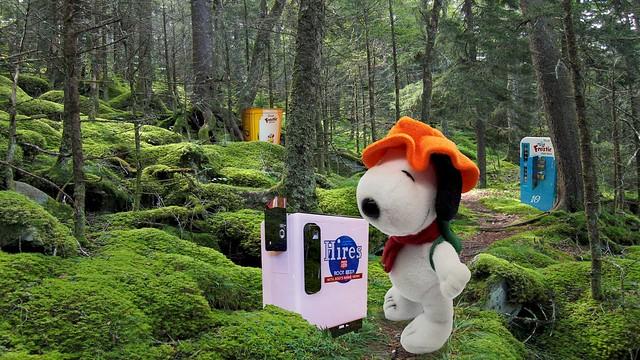 Beagle Scout! - Bijou Planks 361/365