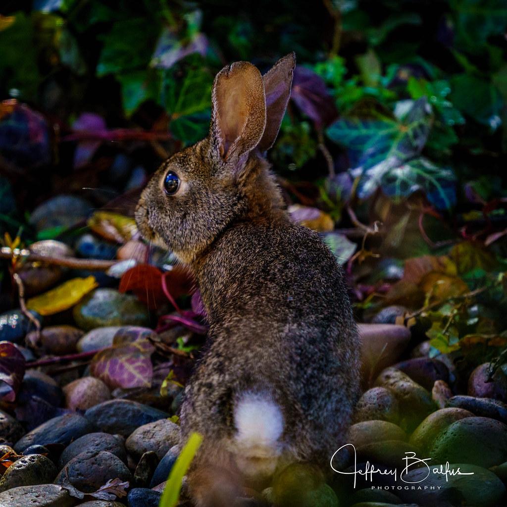 Garden Visitor. EXPLORE 12/28/20 #257