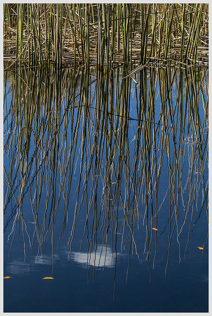 Lake Woodruff #11 2020; Marsh Reflection