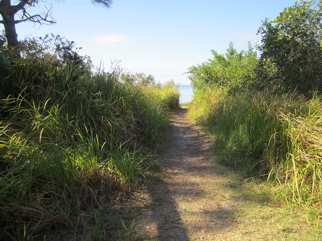 Side Trail View