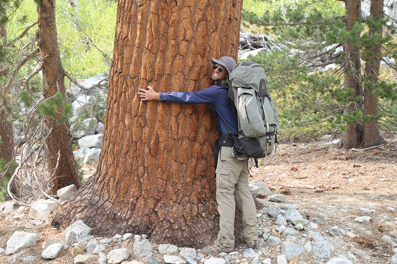 Yet another Tree-Hugger on the Pacific Crest Trail - they're everywhere!