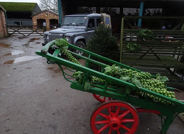 No sprout shortage
