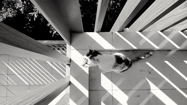 362/366: feline angles