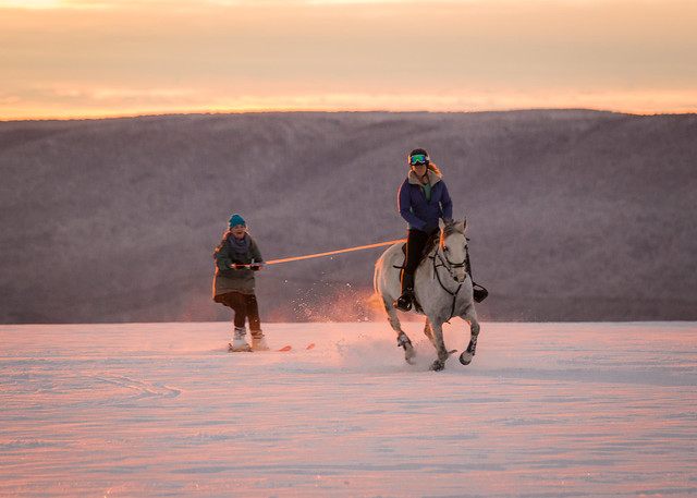 20201219 Skijoring by Harris_100
