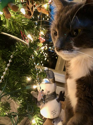 Crick by the Christmas Tree