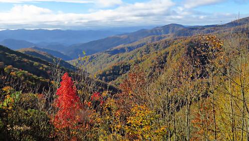 mountains landscape fall northcarolina greatsmokymountainsnationalpark nationalpark foliage trees smokymountains mountainrange