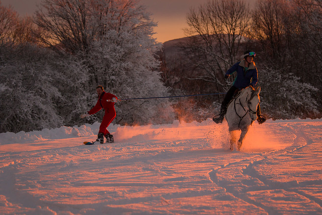 20201219 Skijoring by Harris_119
