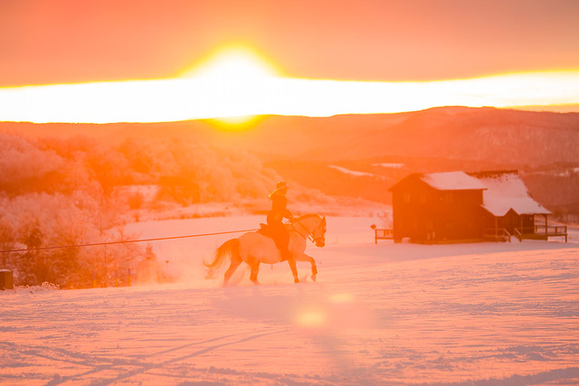 20201219 Skijoring by Harris_95