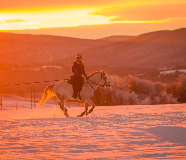 20201219 Skijoring by Harris_133
