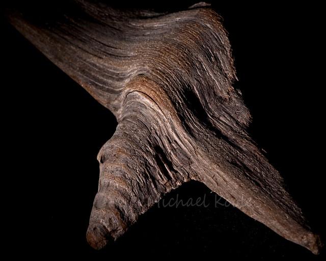 Driftwood Texture. #Shoot52, Week52