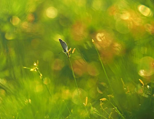 A Butterfly's Sunbath