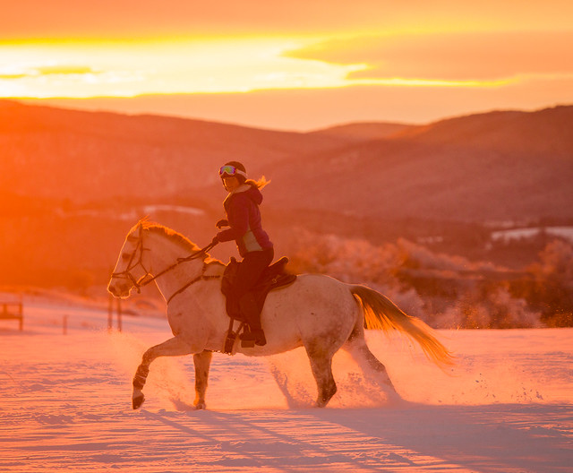 20201219 Skijoring by Harris_139