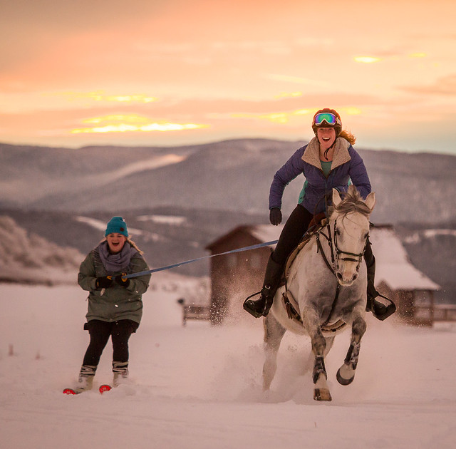 20201219 Skijoring by Harris_186