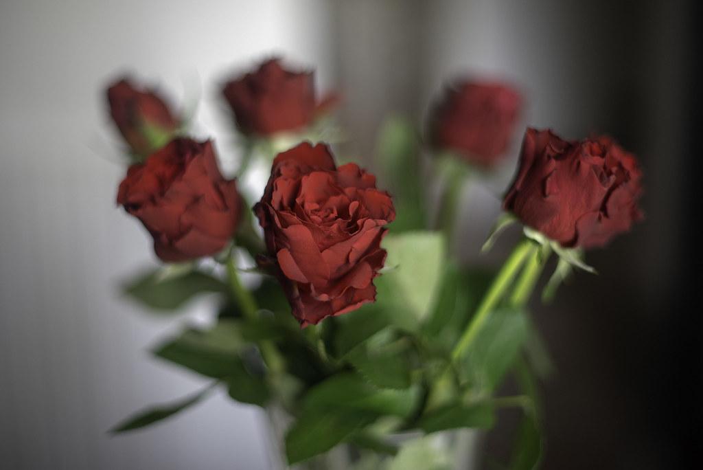 Des Roses pour Noël