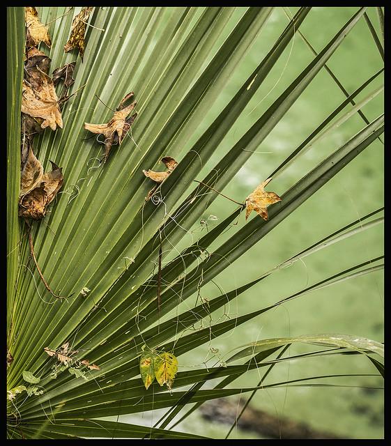 Bridge Swamp #17 2020; Sycamore & Sabal Palm